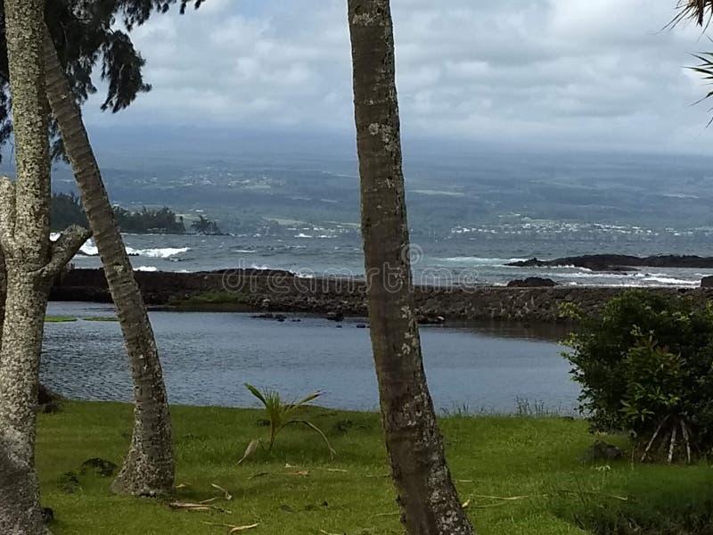 Insel-Ozeanbäume Hawaiis große stockfotos