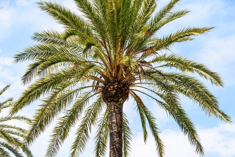 Insel-Palme auf blauem Himmel stockbilder