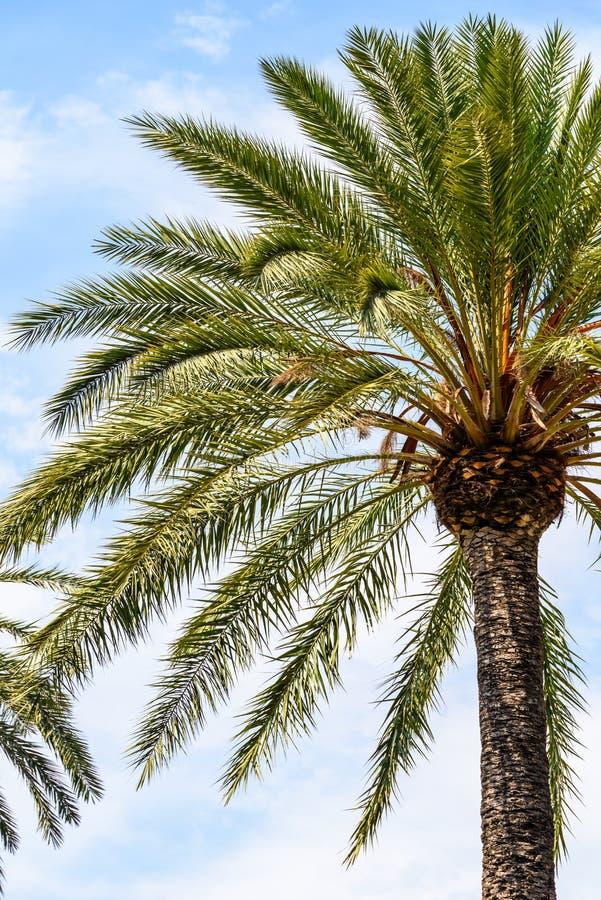 Insel-Palme auf blauem Himmel lizenzfreie stockfotos