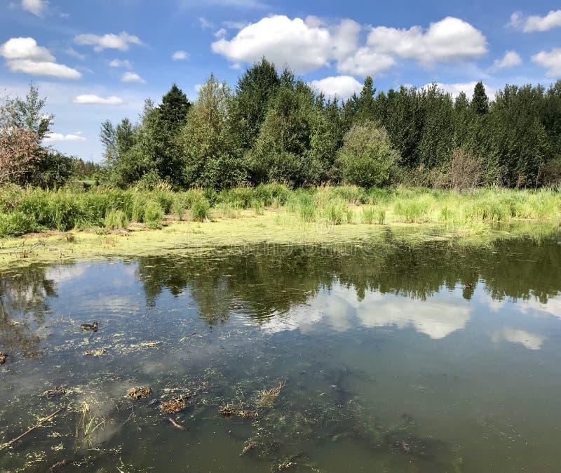 Inselansicht in See Astotin des Elch-Insel-Nationalparks in Alberta lizenzfreies stockfoto