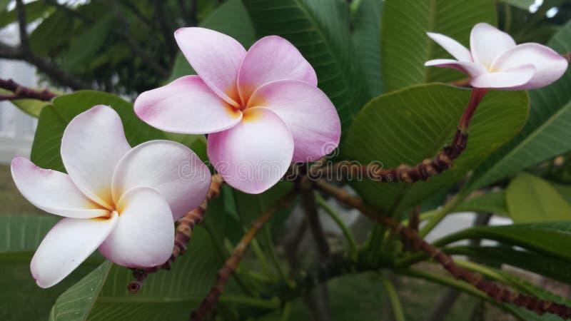 Inselblumenliebe lizenzfreies stockfoto