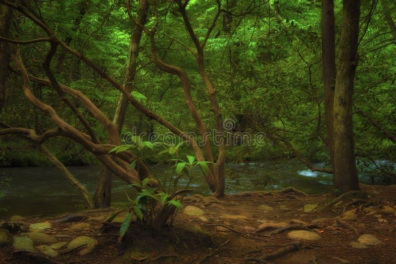 Insenatura del mulino in valle della baia di Cades in Tennessee Smoky Mountains immagini stock libere da diritti