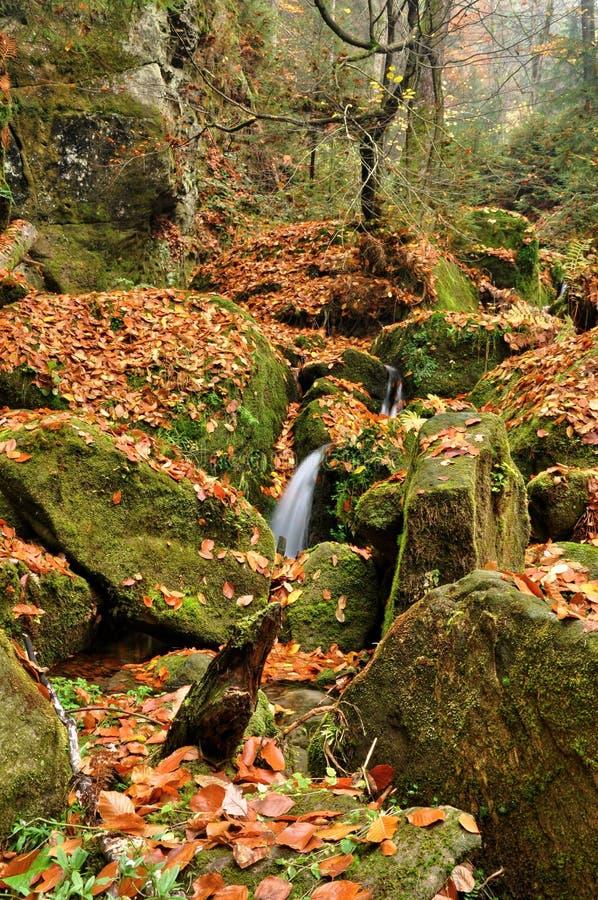 Insenatura di autunno immagine stock