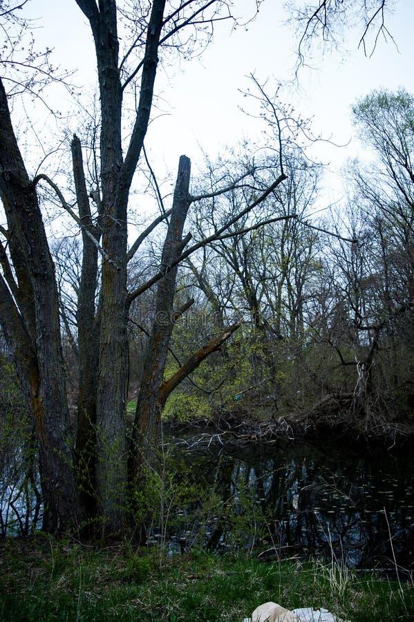 Insenatura ed alberi minacciosi ispirati gotici di Midwest fotografia stock libera da diritti