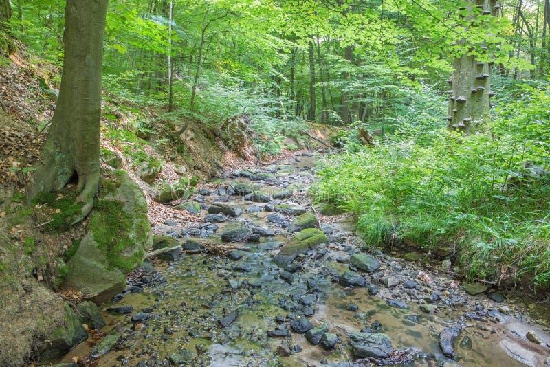 Insenatura in foresta di piccole colline carpatiche fotografia stock
