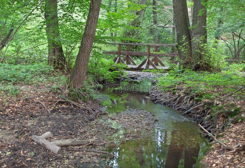 Insenatura in foresta di piccolo carpatico immagini stock libere da diritti