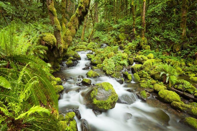 Insenatura in foresta pluviale fertile, gola del fiume Columbia, U.S.A. fotografia stock