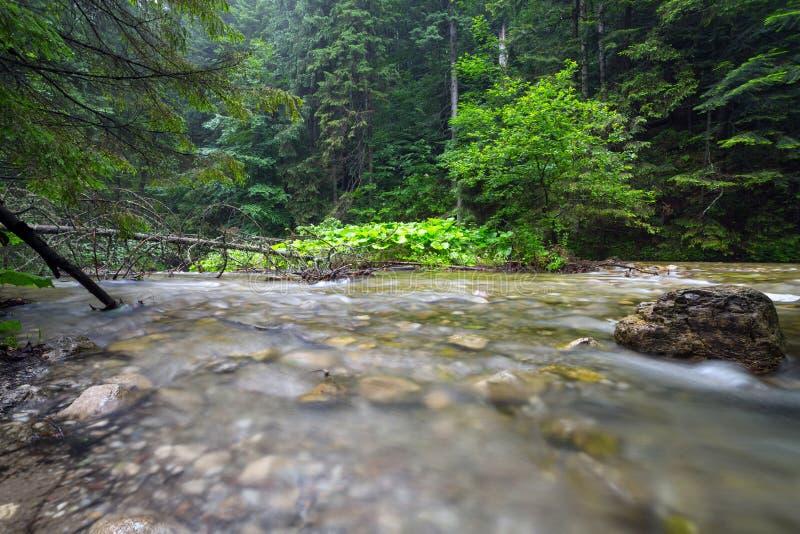 Insenatura rocciosa in montagne di Tatra fotografia stock