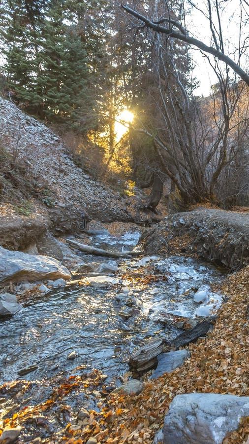 Insenatura rocciosa verticale su una foresta con il terreno coperto in foglie cadute in autunno immagine stock libera da diritti