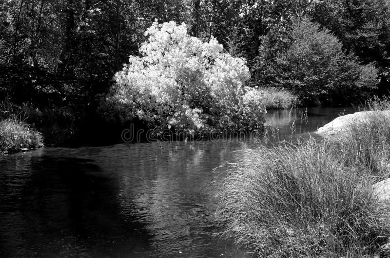 Insenatura Sedona Arizona della quercia immagine stock