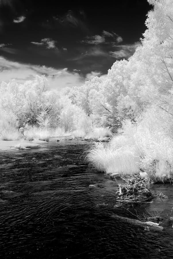 Insenatura Sedona Arizona della quercia fotografia stock