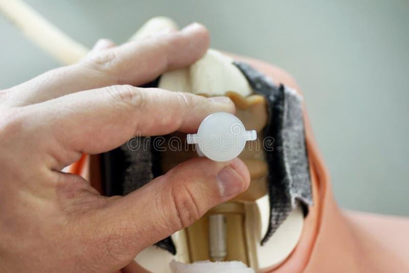 Inserción El Tubo Traqueal Durante Cricothyrotomy Modelo De La ...