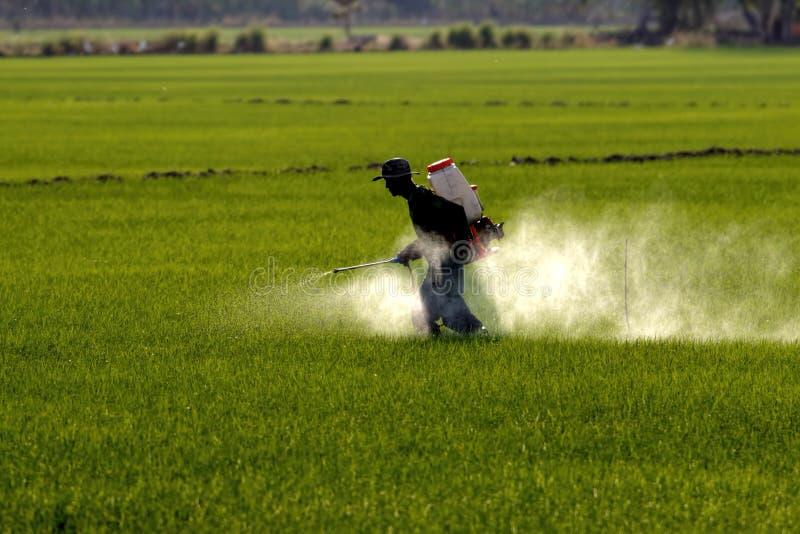 Inseticida de pulverização do fazendeiro no campo de almofada fotografia de stock