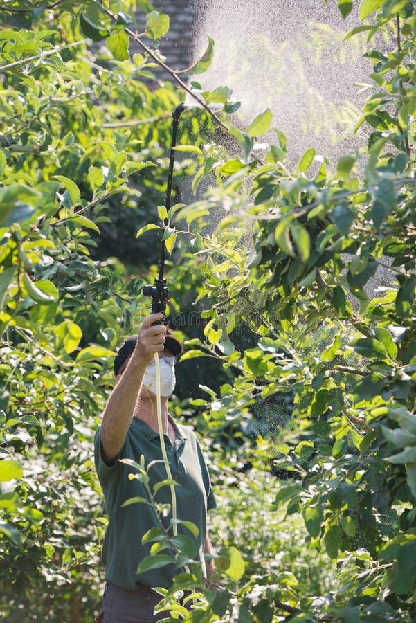 Inseticida de pulverização em árvores de fruto fotos de stock