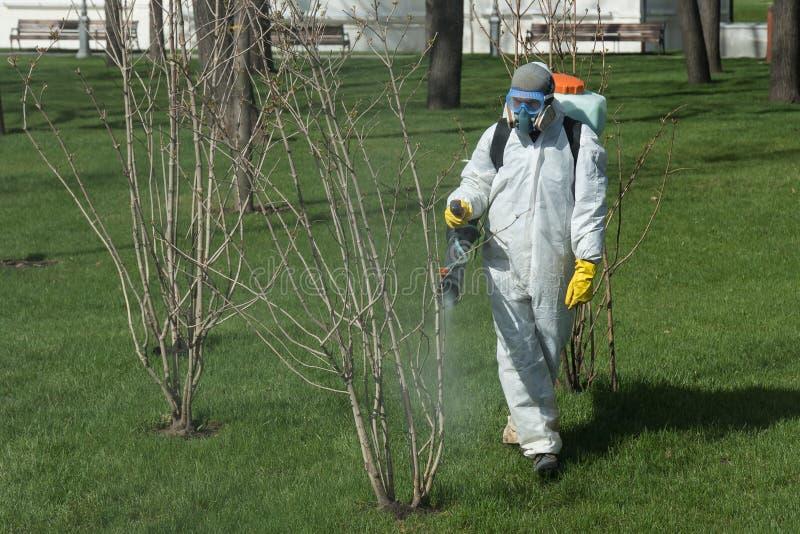 Inseticida de pulverização perito do controlo de pragas na árvore pequena em um jardim fotos de stock royalty free