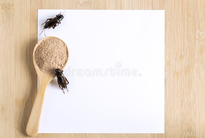Inseto do pó do grilo para comer e cozinhar o alimento na colher de madeira com o modelo do Livro Branco no fundo de madeira é bo foto de stock