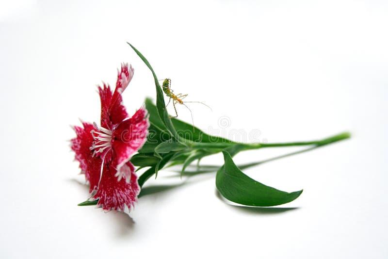 Inseto na flor fotos de stock royalty free