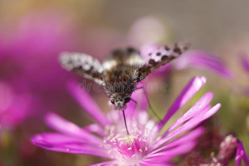 Inseto na flor fotografia de stock