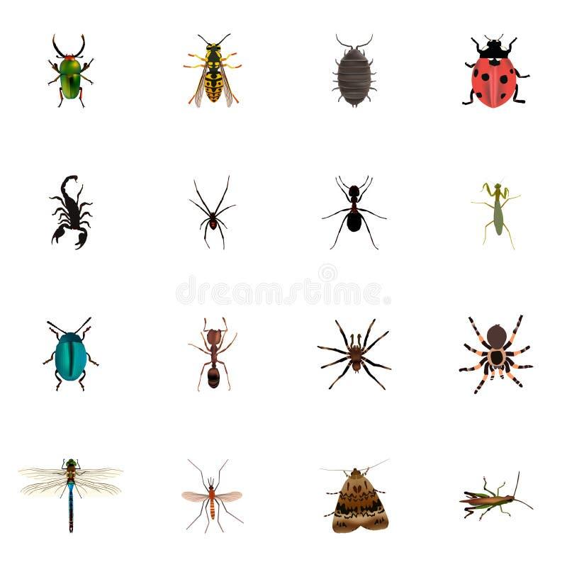 Inseto realístico, locustídeo, borboleta e outros elementos do vetor O grupo de símbolos realísticos do inseto igualmente inclui  ilustração stock