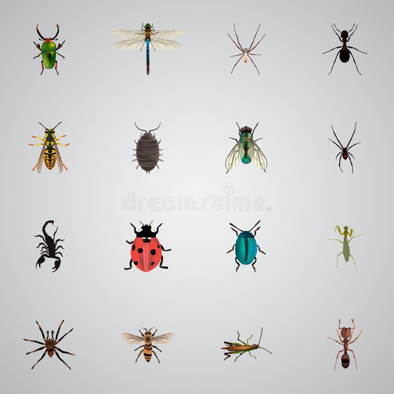 Inseto realístico, locustídeo, joaninha e outros elementos do vetor O grupo de símbolos realísticos do inseto igualmente inclui o ilustração stock