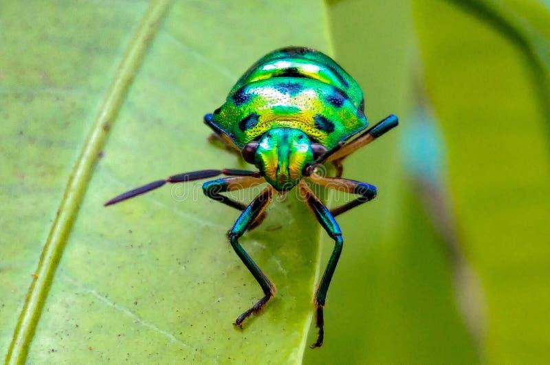 insetos imagens de stock