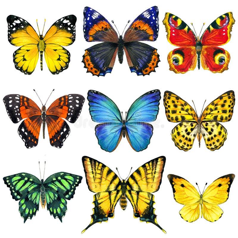 Insetos da borboleta isolados Ilustração da aguarela ilustração stock