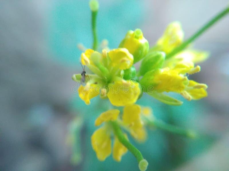 Insetos minúsculos na flor pequena imagem de stock royalty free