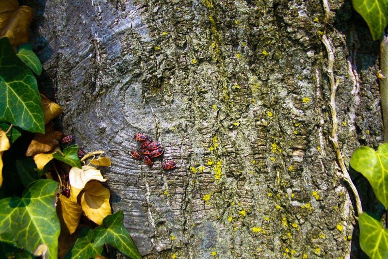 Insetos na árvore imagens de stock