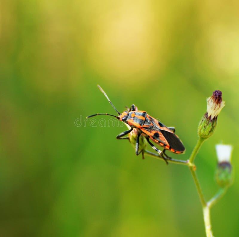 insetti fotografie stock libere da diritti