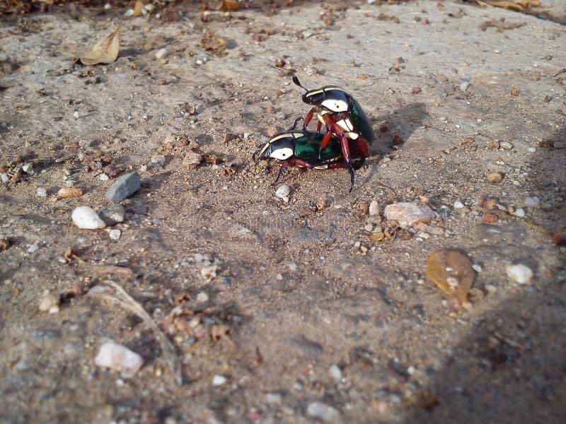 insetti fotografia stock