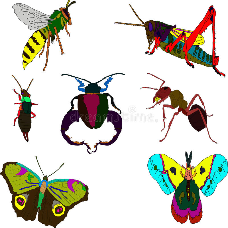 insetti fotografia stock libera da diritti