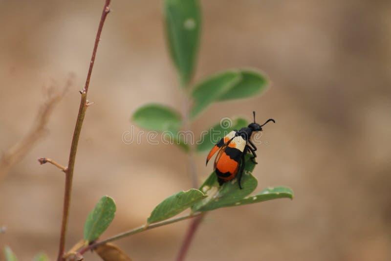 insetti fotografie stock