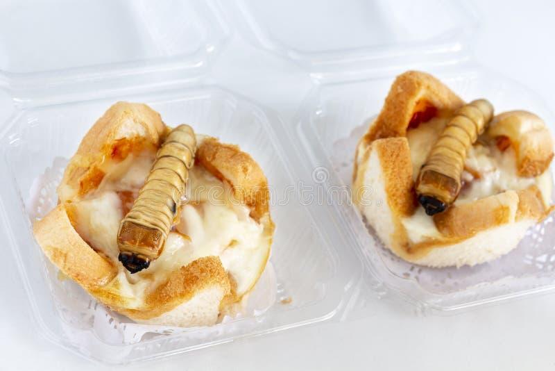 Insetti alimentari: Scarabeo di Scarab per aver mangiato come alimenti di carne di insetto cotta su pane cotto in confezioni è bu immagine stock libera da diritti