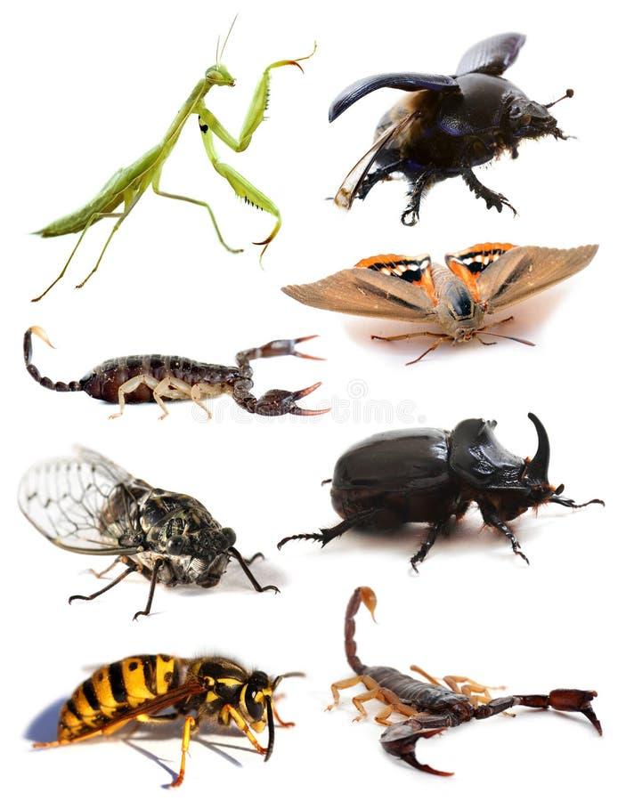 Insetti e scorpioni fotografie stock libere da diritti
