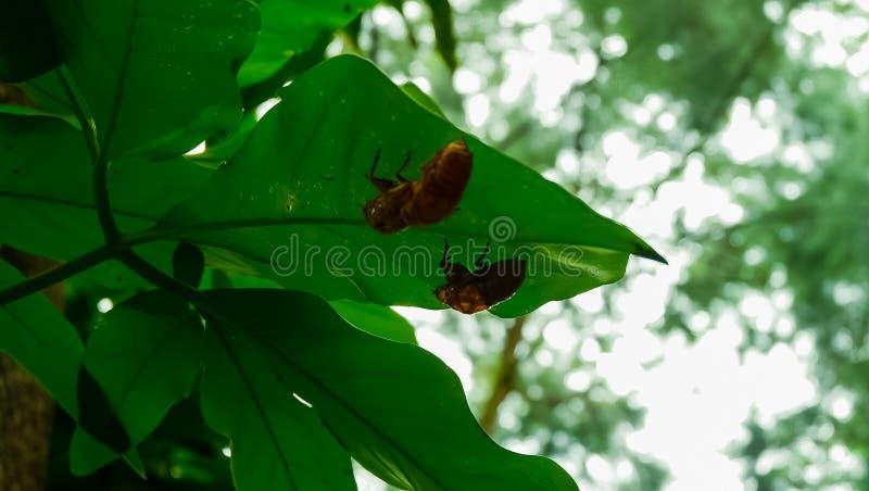 insetto fotografia stock libera da diritti