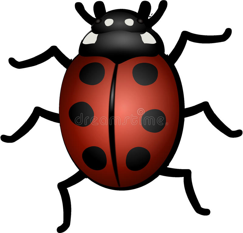 Insetto, Ladybird, scarabeo, invertebrato fotografia stock libera da diritti