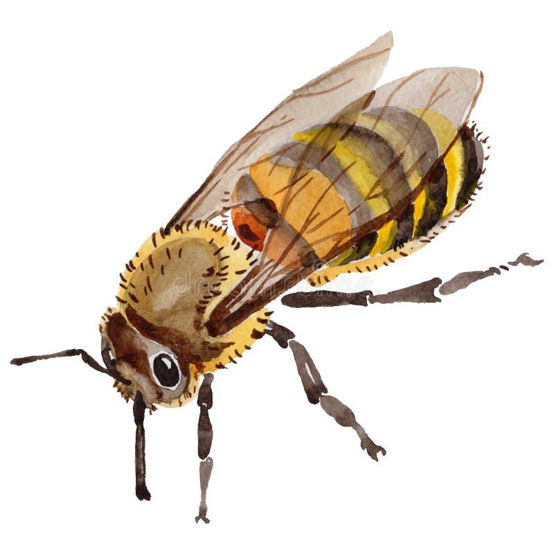 Insetto selvaggio dell'ape esotica in uno stile dell'acquerello isolato illustrazione vettoriale