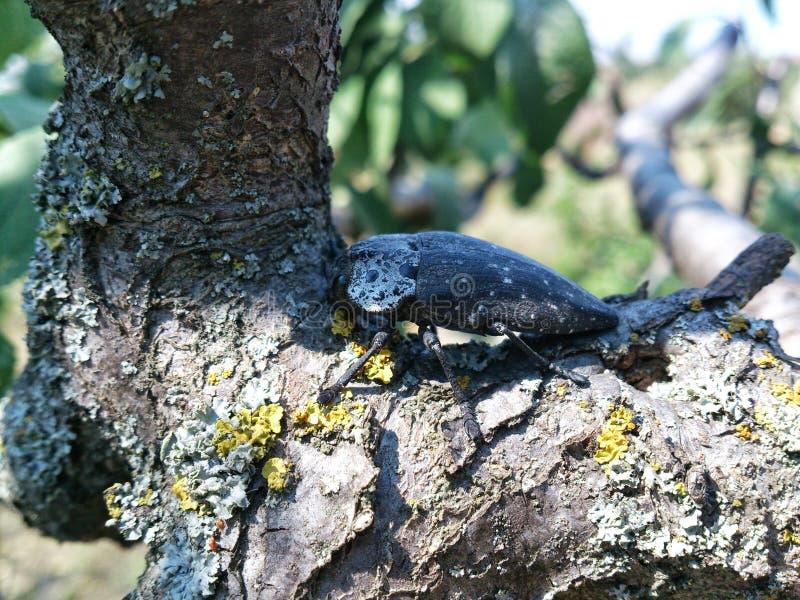 Insetto su un albero fotografia stock
