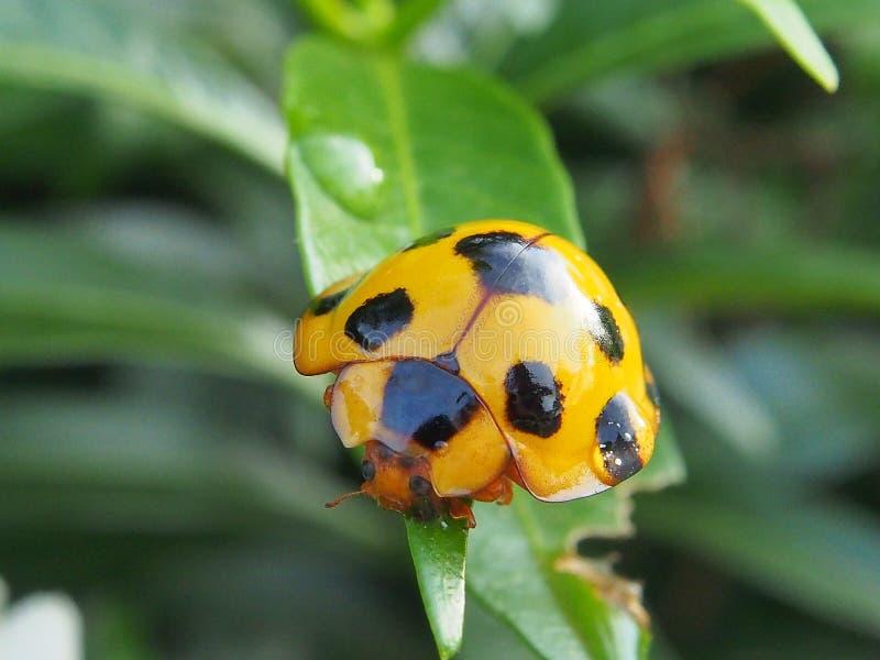 insetto in Tailandia immagine stock