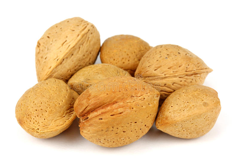 Inshell almonds on white background.  stock image
