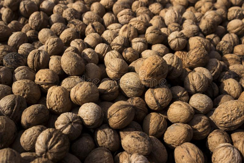 Inshell walnuts dried in the sun, background. Harvesting. Juglans regia, the Persian walnut, English walnut, Carpathian walnut, royalty free stock image