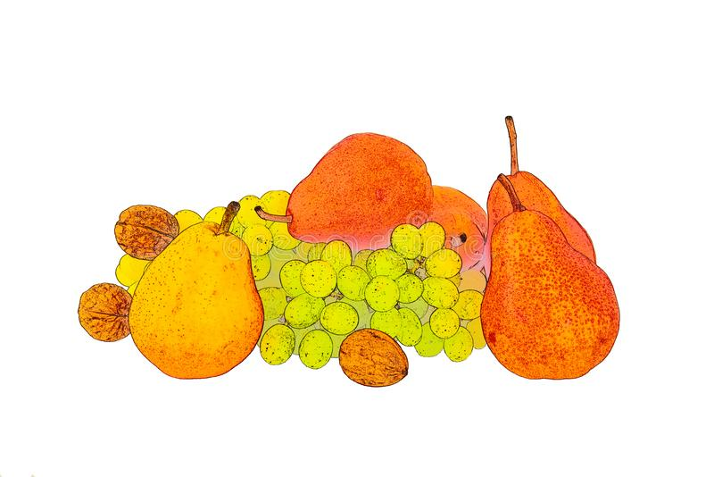 Inshell walnuts with fragrant yellow red ripe pears bunch of grapes on white background. Pencil sketch of ripe red fragrant pears of red and yellow green ripe stock image
