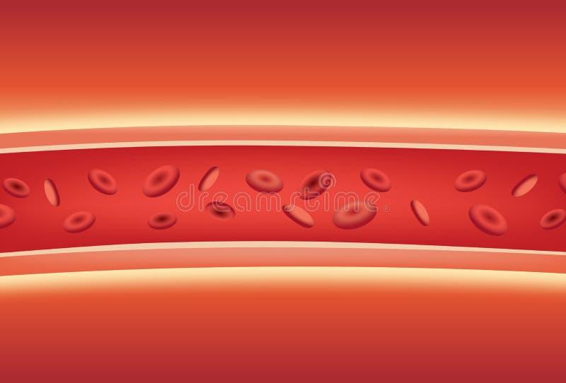Inside of blood vessels. stock illustration