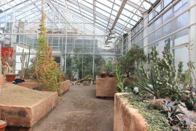 Inside the cactus room of Gothenburg botanical garden, cactus, plants, desert, succulent stock image