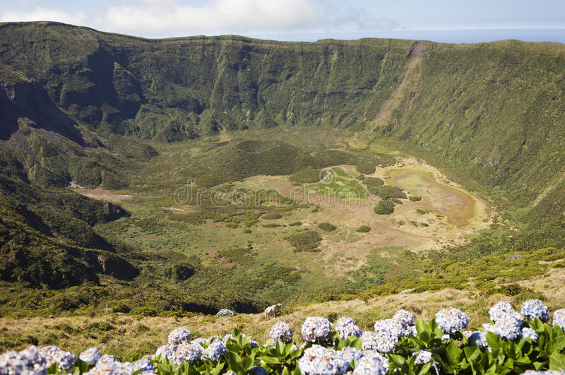 Inside of Caldeira volcano in Faial, Azores royalty free stock image