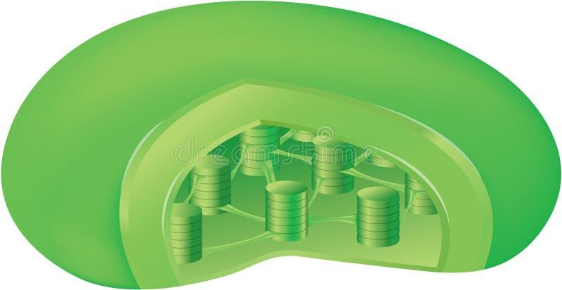 Inside a chloroplast. Diagram of the inside of a chloroplast - the green parts inside a plant cell stock illustration