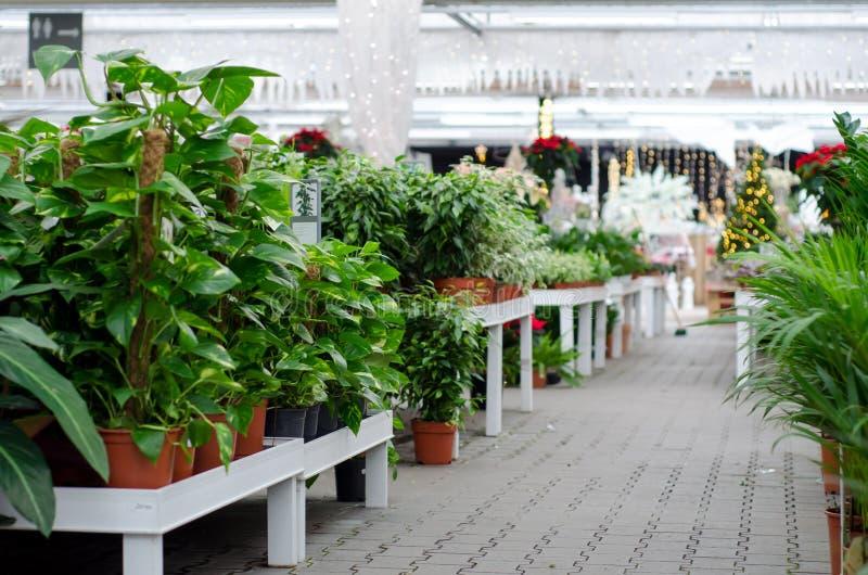 Inside the flower shop stock photos
