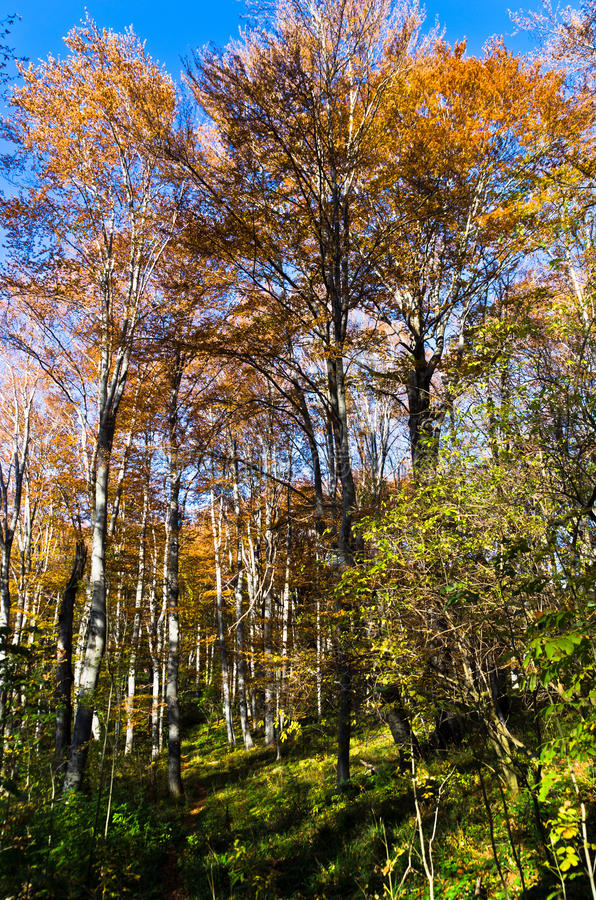 Inside forests of Djerdap national park on a fall sunny day. East Serbia royalty free stock photos