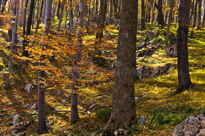Inside forests of Djerdap national park on a fall sunny day. East Serbia stock photo