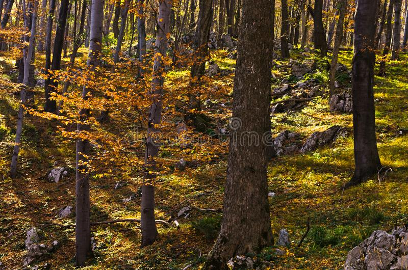 Inside forests of Djerdap national park at Miroc mountain on a fall sunny day. In east Serbia stock photo